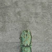 Mini Bucket Bag Fern Green Snake Embossed Leather